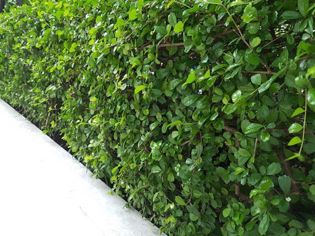 ปลูกต้นไม้ติด กำแพง